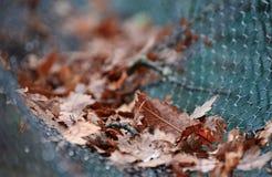 干燥叶子下落在篱芭的铁丝网 免版税库存照片