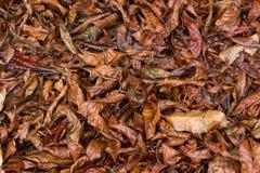 干燥叶子五颜六色的秋天秋天季节自然背景  库存照片