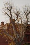 干燥叶子作为秋天背景 库存图片