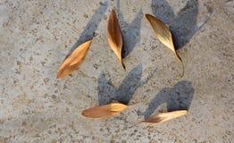 干燥叶子作为秋天背景 免版税图库摄影