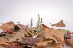 干燥叶子作为秋天背景 库存照片