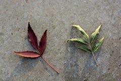 干燥叶子作为秋天背景 免版税库存照片