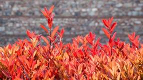 干燥叶子作为秋天背景 免版税库存图片