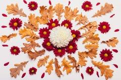 干燥叶子和红色和白花的构成与宠物 免版税库存照片