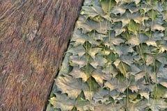 干燥叶子和耳朵自然地毯  免版税图库摄影