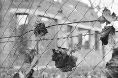 干燥叶子在一个被放弃的大厦,黑白照片的导线 免版税库存照片