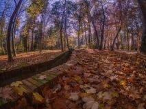 干燥叶子在以公园和浇灌的草甸为基础的秋天 库存图片