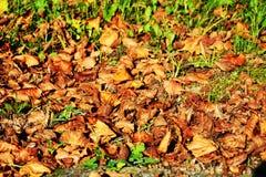 干燥叶子在关闭10月,秋天背景, 图库摄影