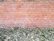 干燥叶子在地板和红褐色的砖块墙壁上在家跌倒在后院庭院里 免版税库存照片