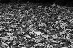 干燥叶子在秋天给一个独特的风景 免版税库存照片