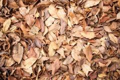 干燥叶子在秋天背景中 免版税库存照片