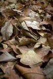 干燥叶子废弃物 免版税库存照片