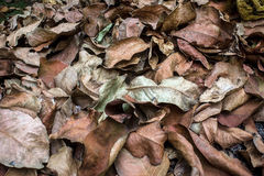 干燥叶子废弃物 库存照片