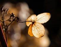 干燥叶子瓣在阳光下 免版税库存图片