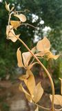 干燥叶子的枝杈 免版税图库摄影