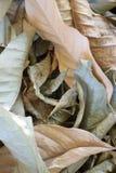 干燥叶子的美好的颜色 免版税库存照片