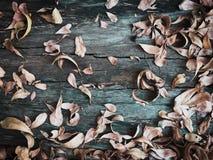 干燥叶子秋天 库存照片