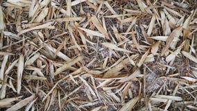 干燥叶子竹子纹理 免版税库存照片