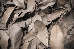 干燥叶子纹理背景 库存图片
