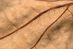 干燥叶子纹理  库存照片