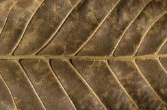 干燥叶子结构下面 免版税库存图片