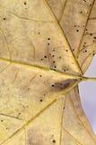 干燥叶子 免版税库存图片