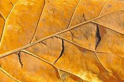 干燥叶子 库存照片