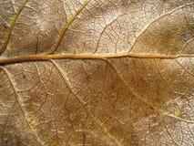 干燥叶子5 图库摄影