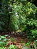 干燥和岩石河床在一个豪华的绿色森林里 免版税库存图片