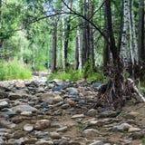 干燥和岩石河床在森林里 图库摄影