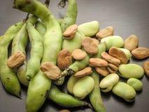 干燥和新鲜的蚕豆种子野豌豆氟乙酰溴苯胺特写镜头和在荚的新鲜的被采摘的未加工的蚕豆在木桌上 免版税图库摄影