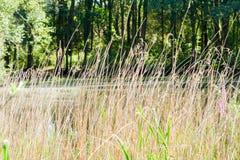 干燥和高草 库存照片