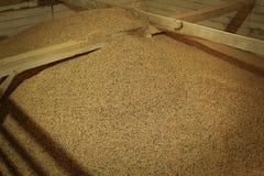干燥咖啡在橡木仓库里 免版税库存图片