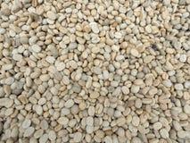 干燥咖啡种子 免版税库存照片