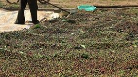 干燥咖啡豆 股票视频