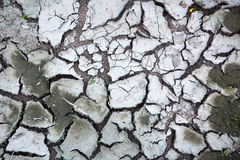 干燥地球 库存照片