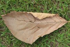 干燥地面叶子 库存照片