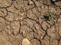 干燥地面纹理与镇压的 免版税库存照片