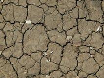 干燥地面纹理与镇压的 免版税图库摄影