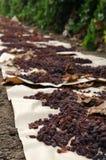 干燥域纸张葡萄干 库存照片