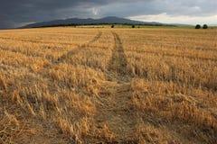 干燥域路在乡下 库存图片