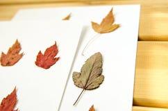 干燥多彩多姿的秋叶样式白色背景 图库摄影