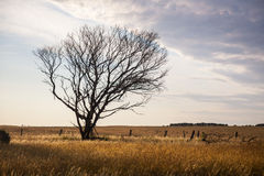 干燥孤立结构树 免版税图库摄影