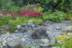 干燥小河床和红色花 库存照片
