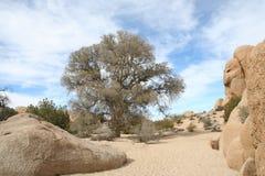 干燥小河床约书亚树国家公园 库存照片