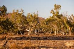 干燥小湾河床。碎片范围。南澳大利亚。 库存照片