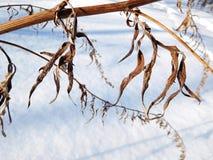 干燥工厂在冬天 免版税库存图片