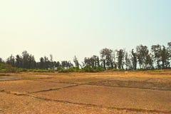 干燥干旱的农田在一个热的夏天在热带区域-饥荒和天旱 库存照片