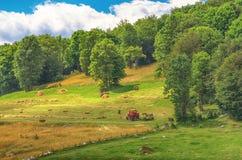 干燥干草拖拉机收获在山岭地区 库存照片