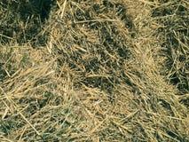 干燥干草纹理 库存图片